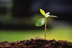 Agisci come se … il seme fosse già germogliato